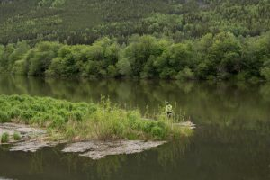 Fiske i Lågen ved Selsvollene fluesone. Foto: Anders Dahl Eriksen