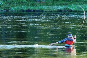 Fluefisker i ferd med å sikre fangsten