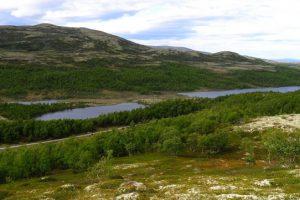 Fiskevannene ligger på rekke og rad gjennom Rødalen