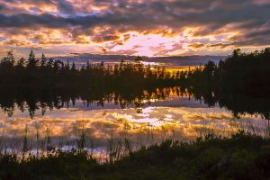 Foto: Neaflyfish. www.Selbuutmark.no